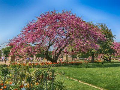 jardins de-paris
